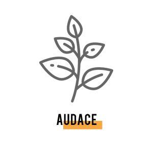 audace - Espace et solutions, coaching, formation, conseil