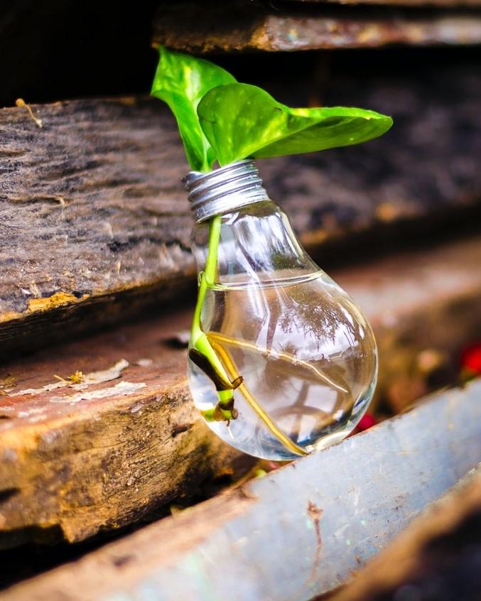 mes racines - Espace et solutions coaching, formation, conseil